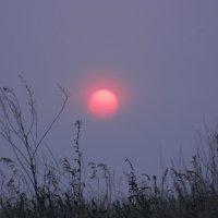 солнце :: Виктория Минаева