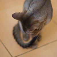 Cat :: Maria Zayviy