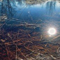 Чистое болото :: Never Forever