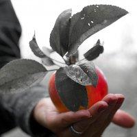 Молодильные яблоки :: ID@ Cyber.net