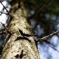 Бабочка :: Евгения Бутырина