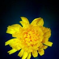 цветочек :: Evgeniy Evteev