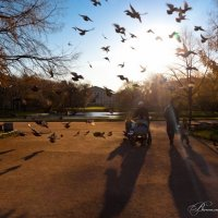 Ах, эти неожиданные птички... :: Виталий Ахмедьянов