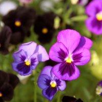 Цветы :: Ульяна Сафронова