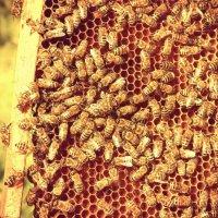 Производители мёда :: Натали V