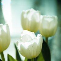 Тюльпаны :: Анастасия Nast