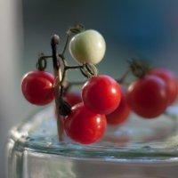 tomatoes :: Павел Красовский