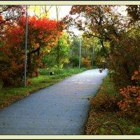 Краски осеннего парка :: L Nick