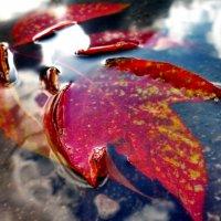 Осенняя лужа :: Дмитрий Люльчак