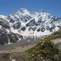 Снежные вершины. :: Жанна Савкина