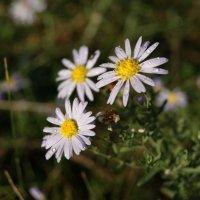 Цветы. :: Дмитрий Петров