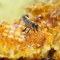 """пчела лакомится мёдом в сотах...""""мёд в сотах""""-волшебное словосочетание.. :: Наталья Загорулько"""