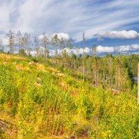 Karelia Dream :: Mary Kotenko
