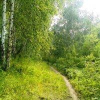 Там на невиданных тропинках... :: Екатерина Богданова
