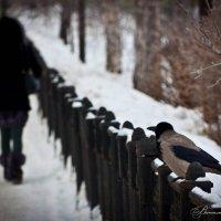 Дневной дозор :: Виталий Ахмедьянов