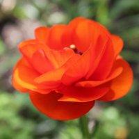 Flower :: Мария Полосина