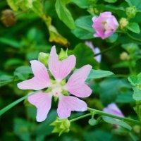 цветочек чудный лепесточек... :: Александра Полякова-Костова