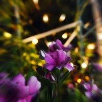 Ночные цветы :: Анастасия Андреева
