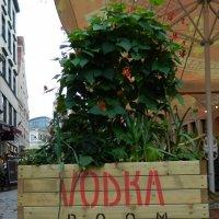 Vodka room :: Lina Liber