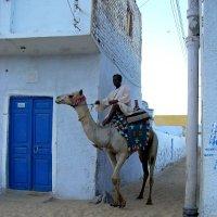 Нубийская деревня.Корабль пустыни и показатель статуса семьи. :: Лариса Борисова