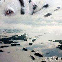 Большая собака :: Владимир Мельников