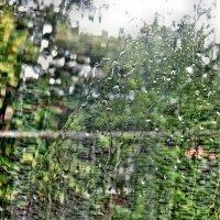 Дождь за окном :: Игорь Мукалов