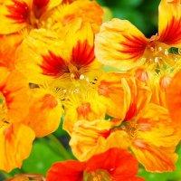 Цветы в стиле импрессионизм :: Анастасия Ткаченко