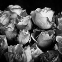 Розы :: Ekat Grigoryeva