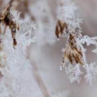 Снежинки :: Юлия Лисецка