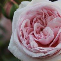 Цветок :: Дарья Воропаева