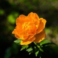Цветок :: Роман Яшкин