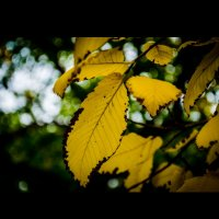 Сырой сентябрь дышит в спину, осень отпусти меня... :: Настасья Емельянова