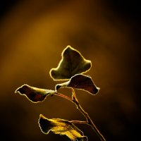 Осенний свет :: Андрей Селиванов