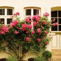 Розы :: Andrey Spizhavka