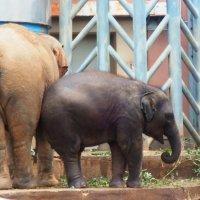 слонёнок :: Александра Полякова-Костова