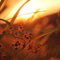 Закат лета :: Виолетта Орешкова