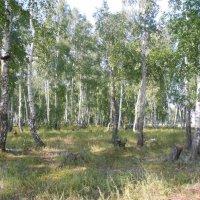 Армянский лес :: Ольга Янцен