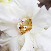 Wedding rings :: Анна Ильевская
