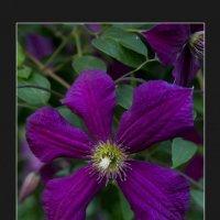 Цветы2 :: Павел Сухоребриков