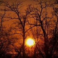 Зимний закат :: Anton Yatsenyuk