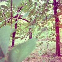 зеленый парк :: Томка Богданюк