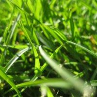 Трава :: Виктория Котлярчук