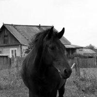 Лошадь :: Маша Путина