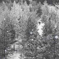 Скоро зима :: Евгения Савина