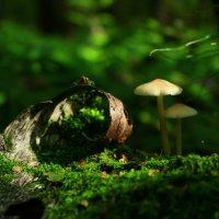 Колдовской лес :: Екатерина Пустовойт