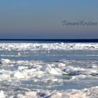 Азовское  море зимой :: Тамара Крутова