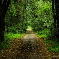 Лесная дорога :: Serj Serj
