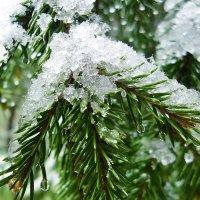первый снег :: Ирина Шабалина