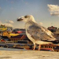 Чайка :: Юлия Францева
