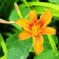 Flower :: Татьяна Степанова